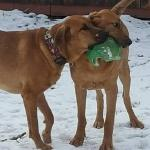 Brothers Brig and Gage love the ball